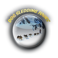 Guide leads guests on a dog sledding tours on Kenai Peninsula.